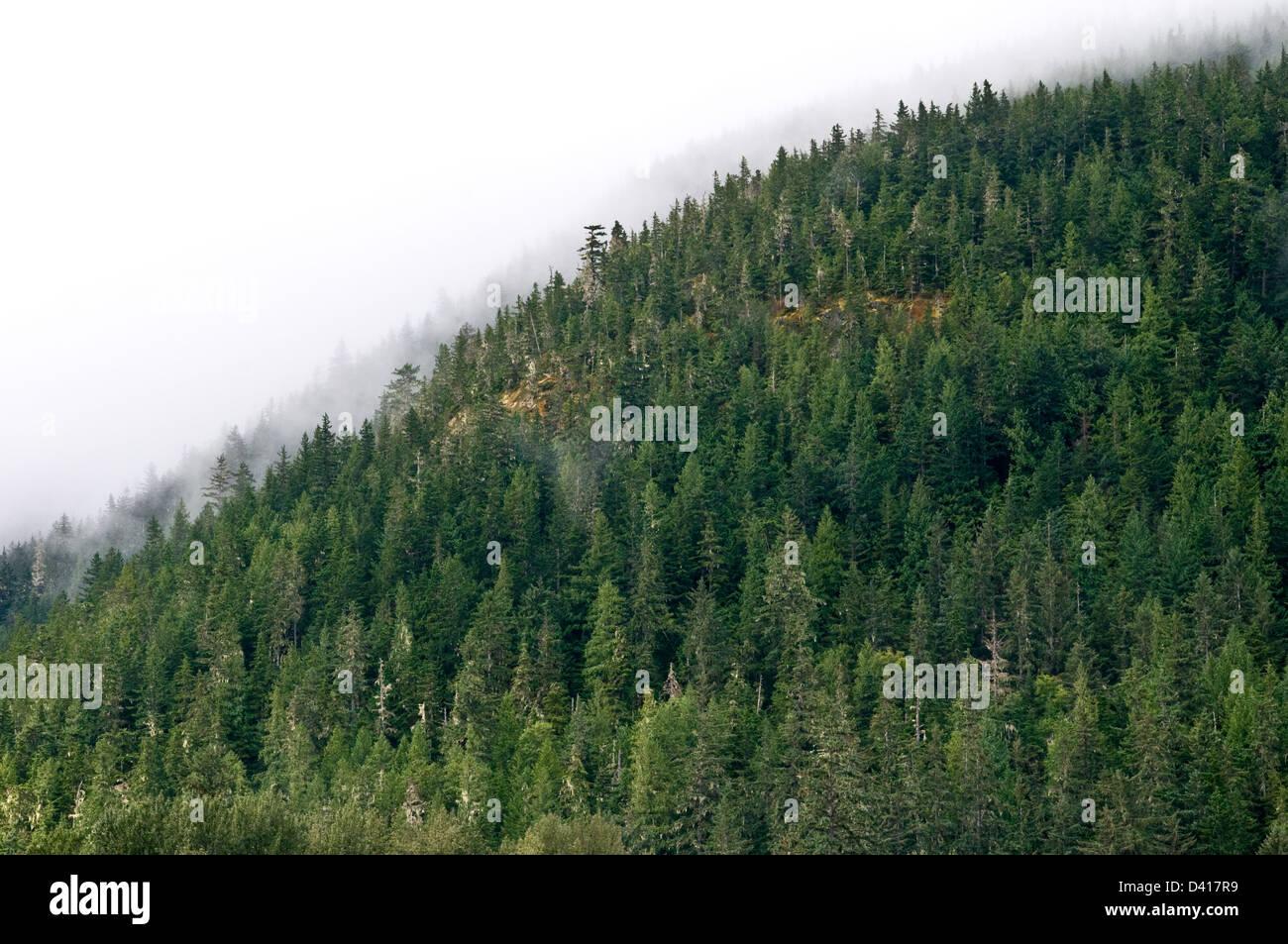 Nebel schwebt über uralten Wald Baumkronen auf einem Berg oberhalb der Stadt Bella Coola, Great Bear Rainforest, Stockbild