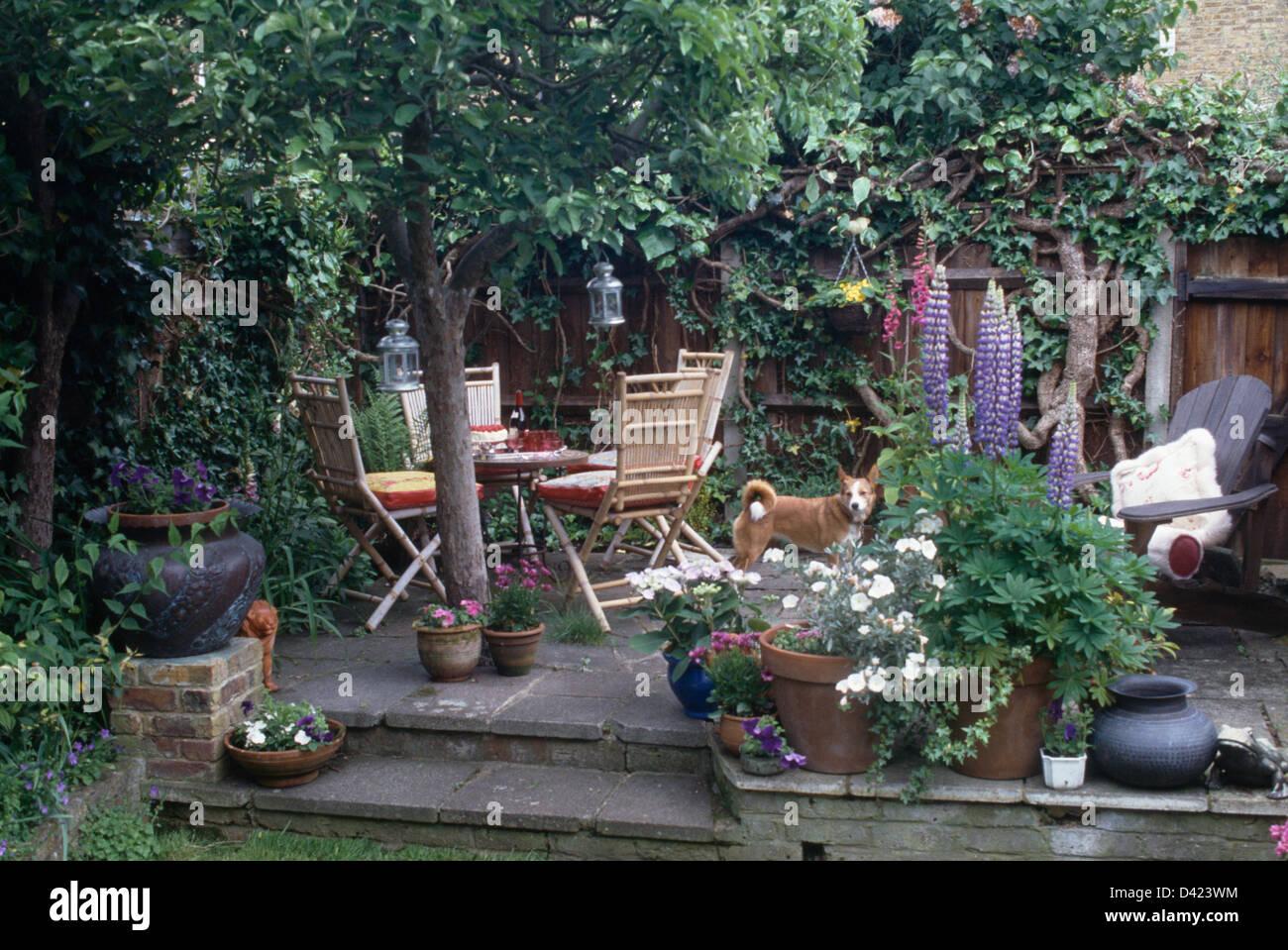 Reihenhaus-Garten mit blühenden Pflanzen in Töpfen und blauen ...