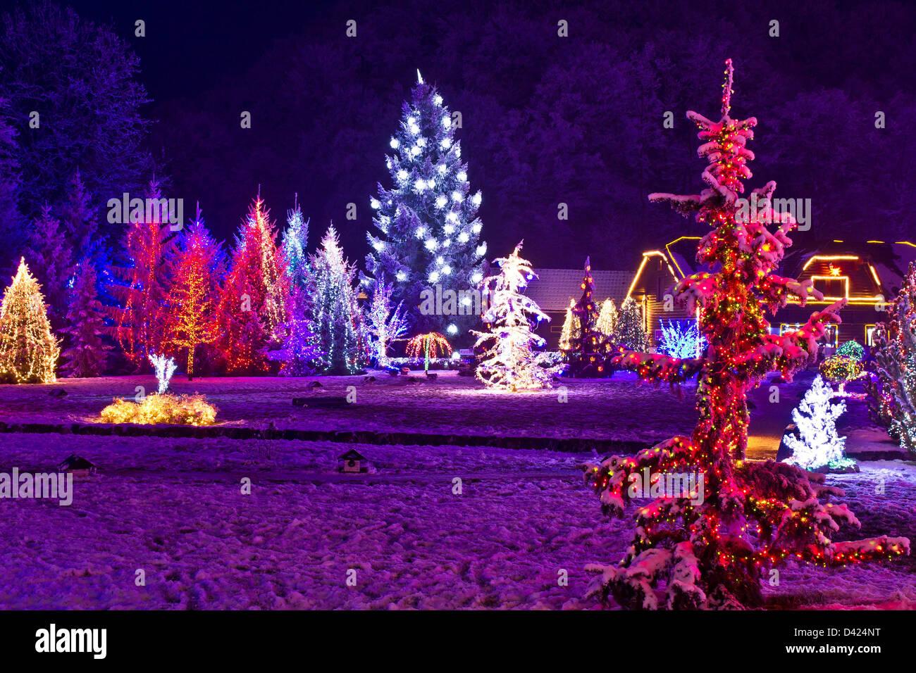 Weihnachten Mit Fantasy.Weihnachten Fantasy Park Wald In Weihnachtslichter Kroatien