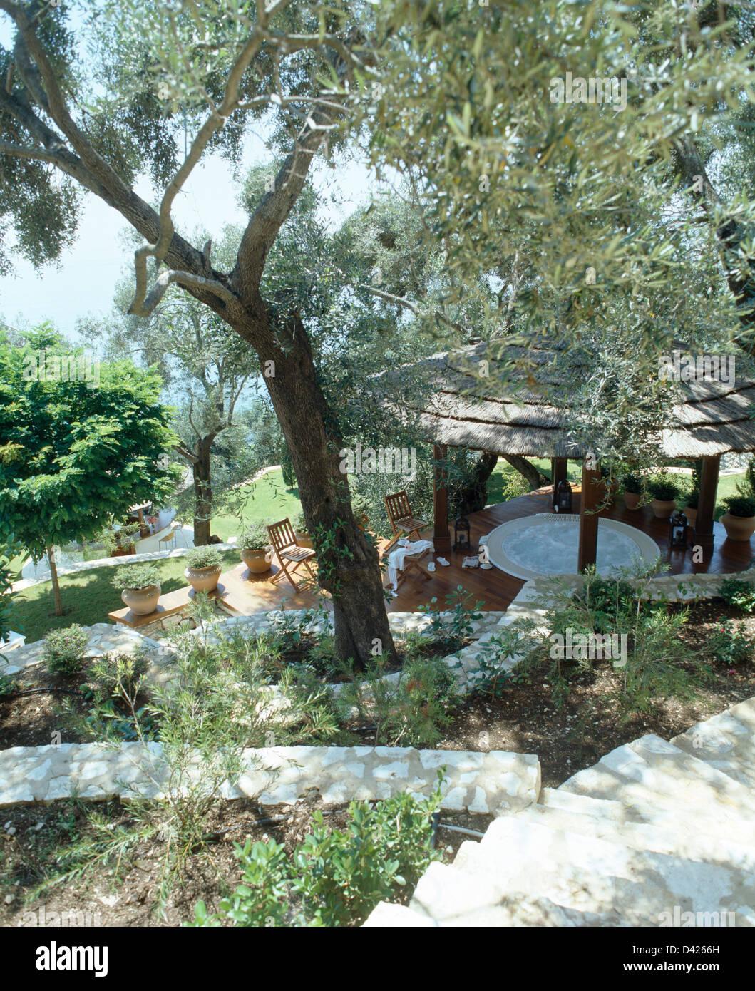 Olivenbaum in Hang Garten mit Blick auf den Pavillon mit Reetdach ...