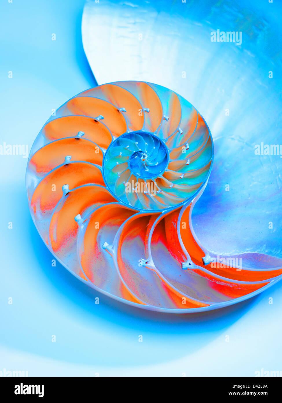 Meeresschnecke in der Mitte zeigt die Kammern, Nautilus Pompilus, Gattung Nautilus halbiert Stockfoto