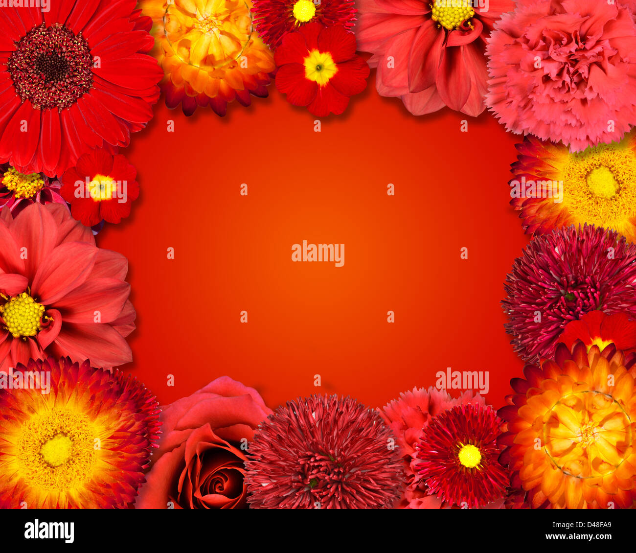 Rahmen mit Blumen. Kollektion rot lila gelb rosa weiss set Dahlien ...