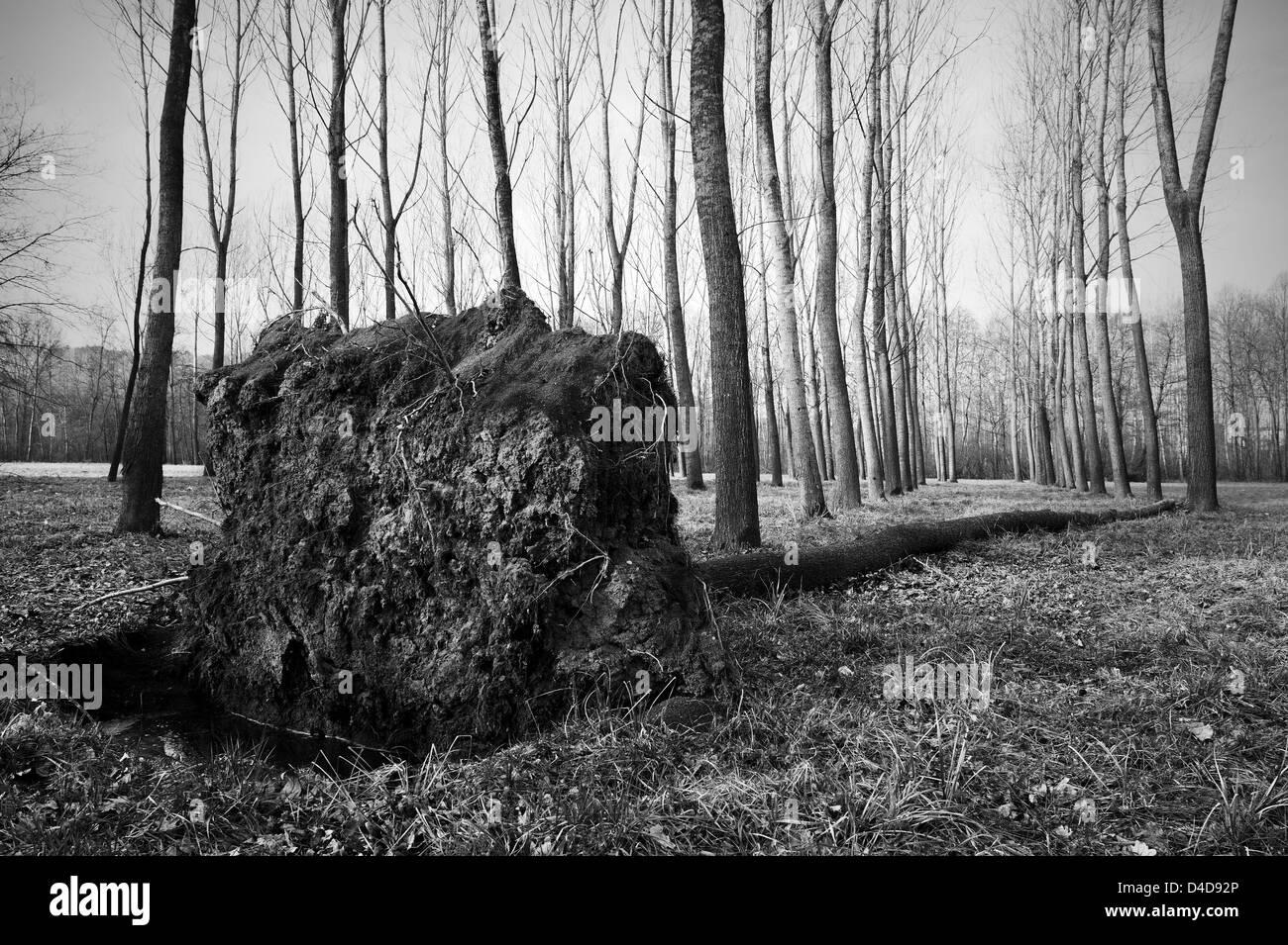 Umgestürzter Baum Stockfoto