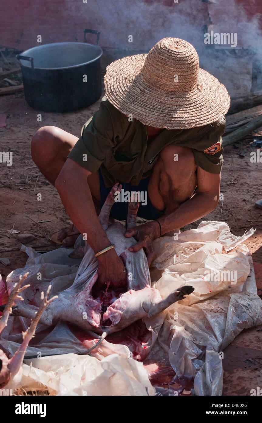 ethnische Akha Mann Reinigung sein Schwein zum Kochen, Muang Singh, Laos Stockbild