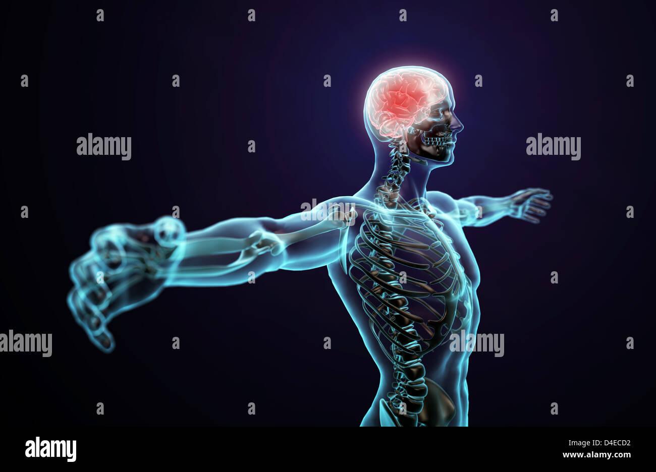 Illustration Abstract Spine Brain Stockfotos & Illustration Abstract ...