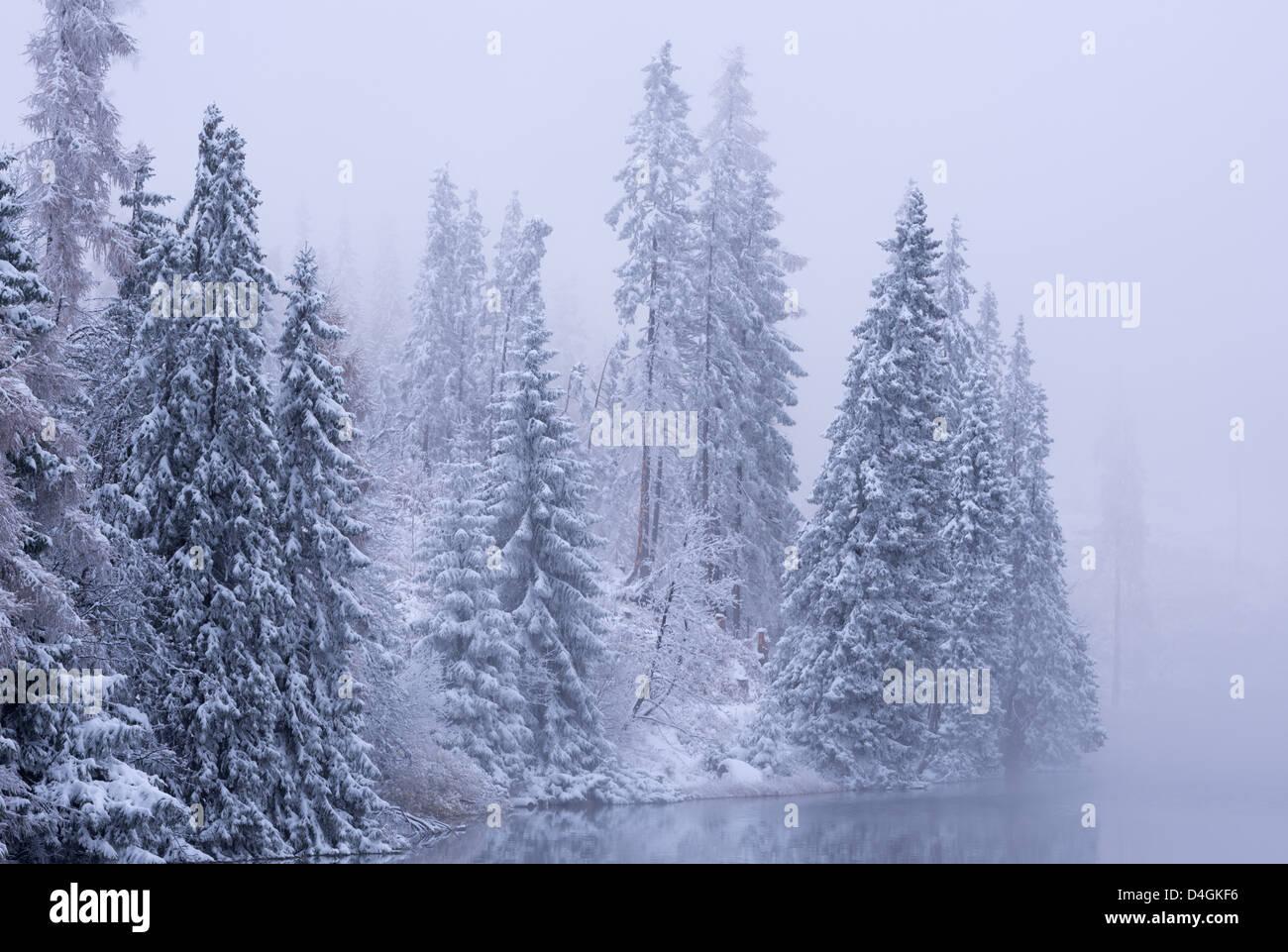 Schneebedeckte Tannen im Winter, hohe Tatra, Slowakei, Europa. Stockbild