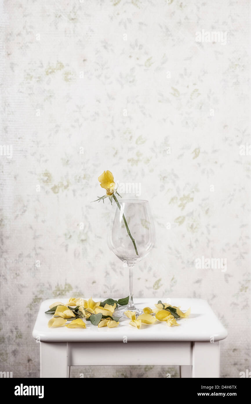 eine gelbe rose in einem Glas verloren ihre Blütenblätter Stockbild