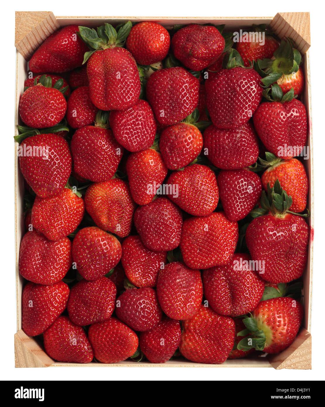 Tablett mit Erdbeeren Stockbild