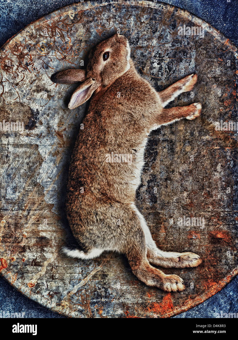 Kaninchen in geflochtenen Korb Stockbild