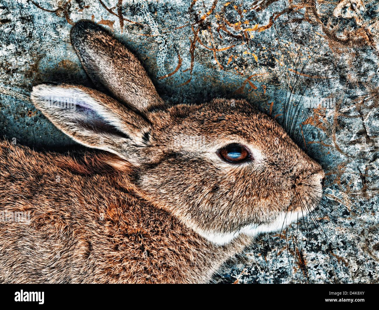 Nahaufnahme eines Kaninchens Gesicht Stockbild