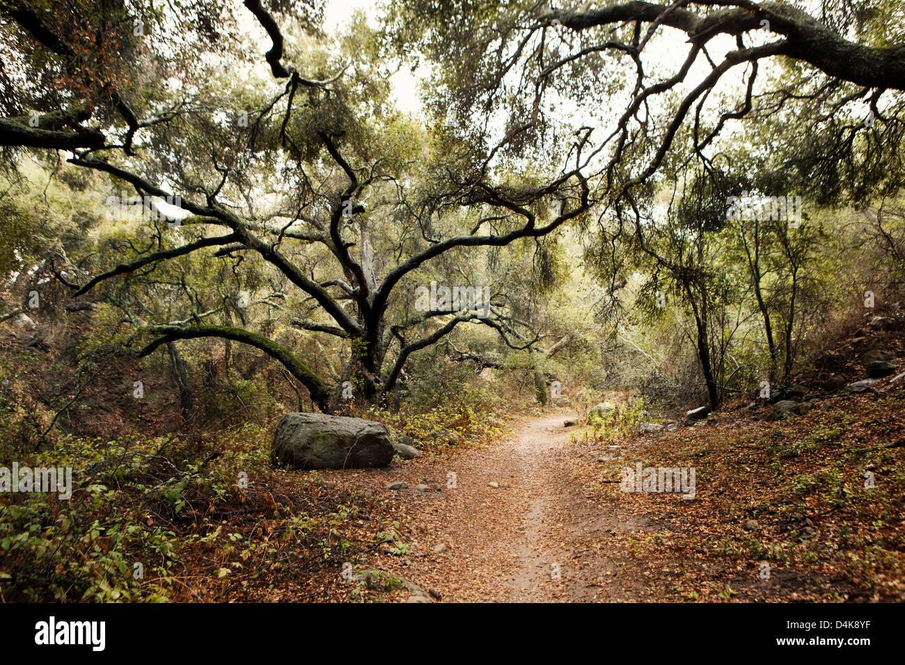 Feldweg im Wald Stockbild