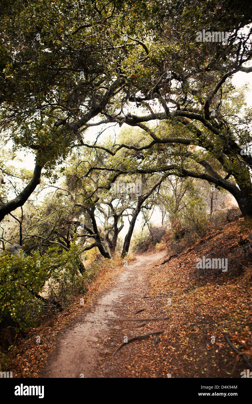 Feldweg im Wald Stockfoto