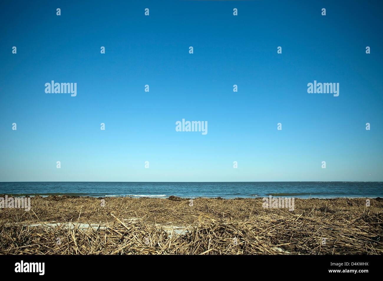 Trockenrasen und Strand Stockbild