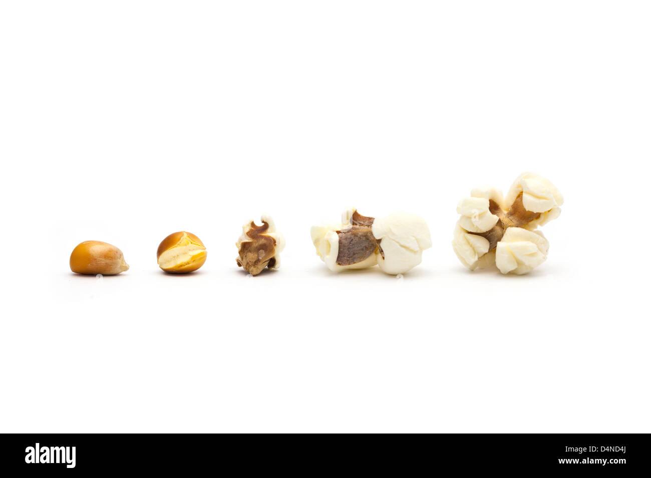 Vom Korn zum popcorn Stockfoto