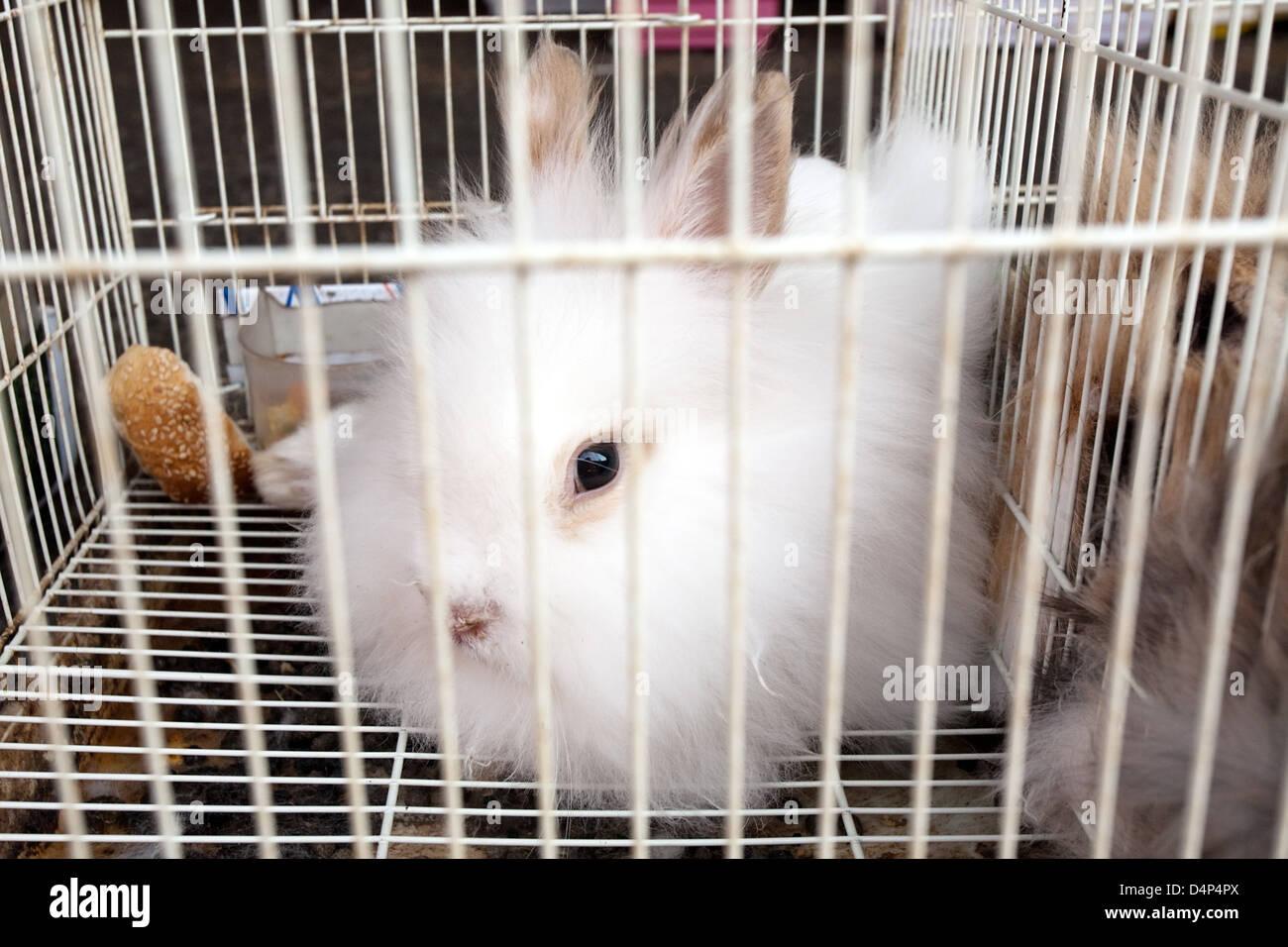 Ziemlich Große Draht Kaninchen Käfige Bilder - Schaltplan Serie ...
