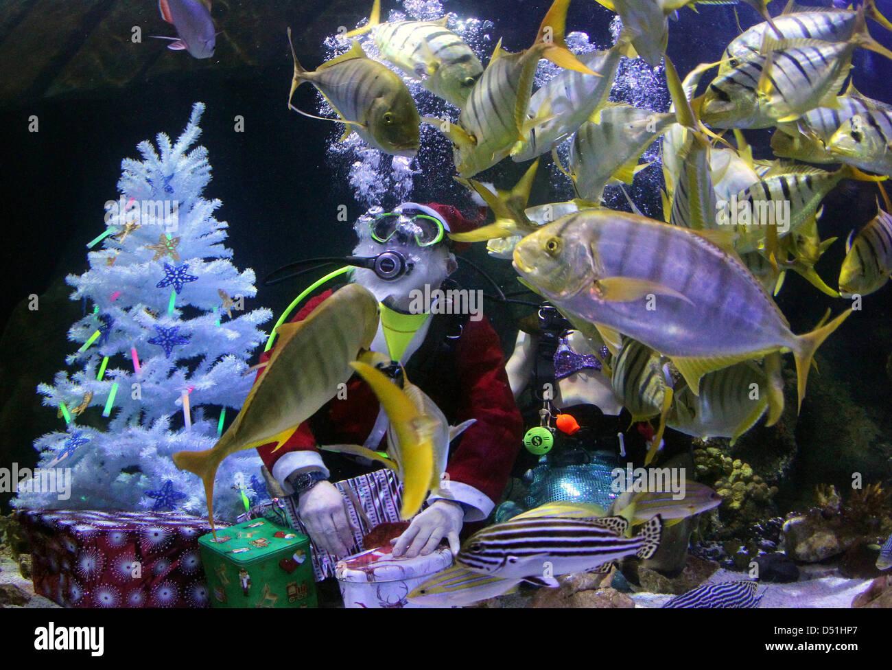 Fische sterben im aquarium