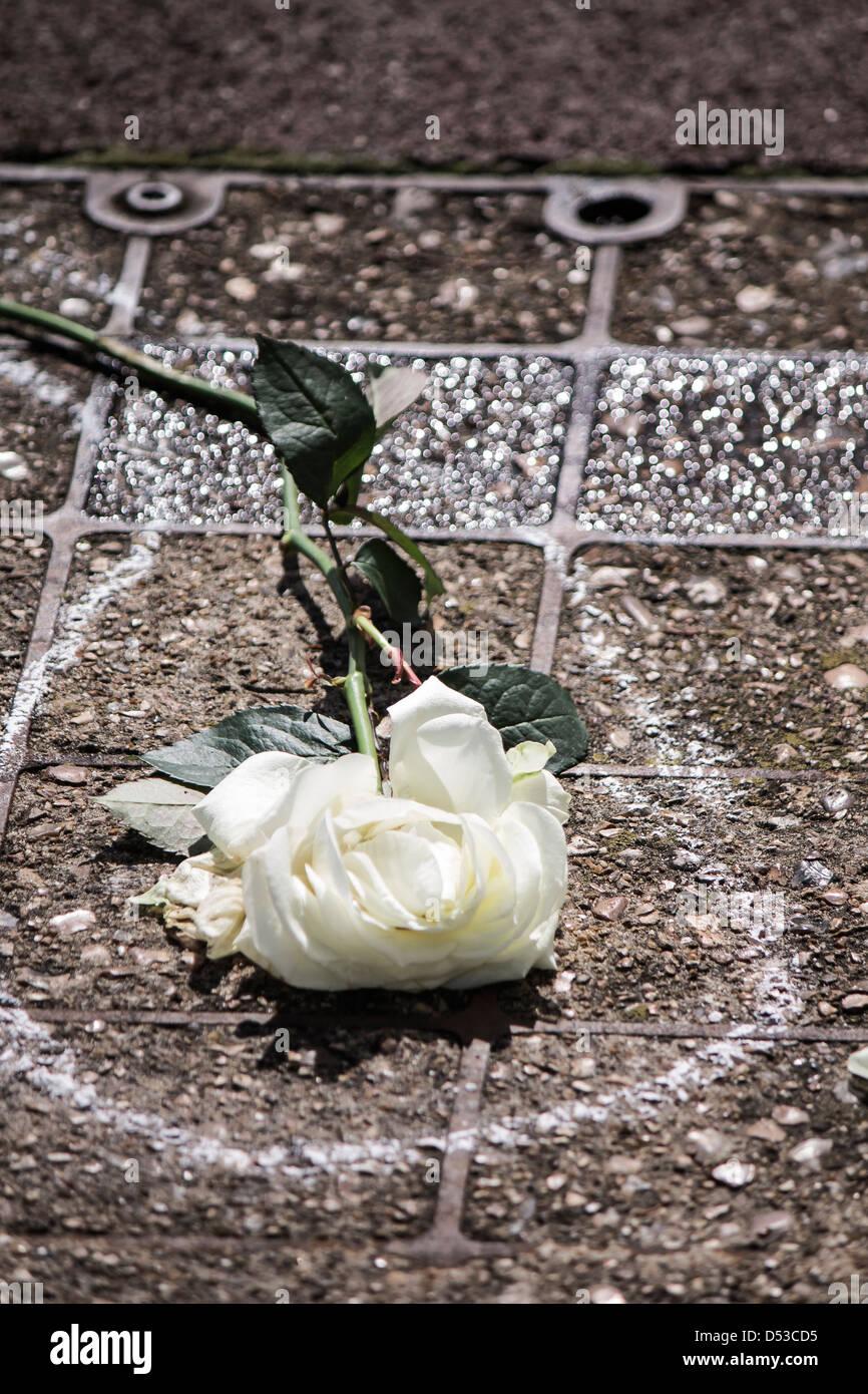 Zerkleinerte weiße Rose und Kreide Gliederung Stockbild