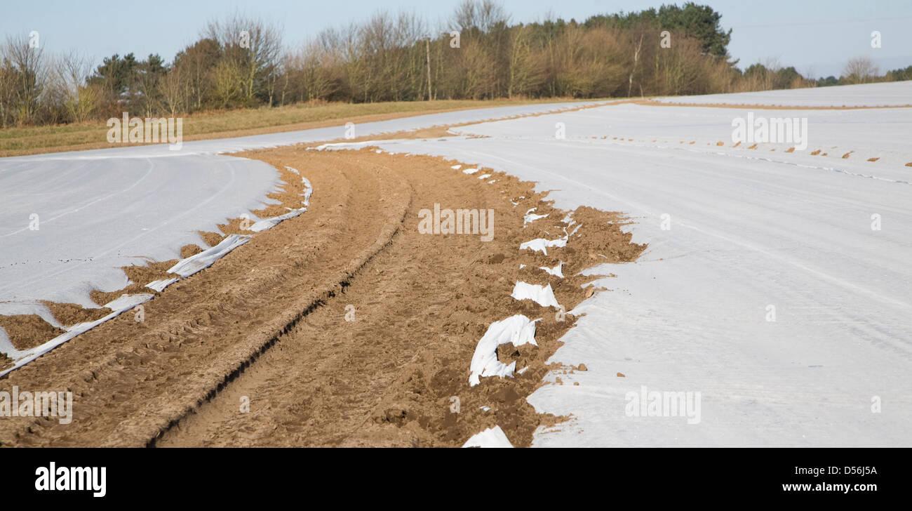 Ernte Schutz Vlies Abdecken Feld Ernten Wantisden Suffolk England