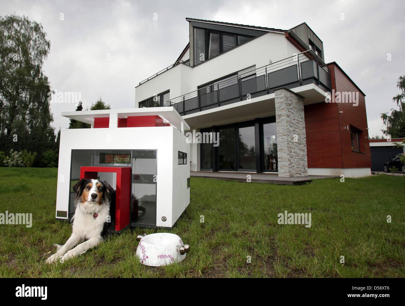 Hund Mara Spaht Aus Seinen Luxus Haus Hundeart Loenneberga Vor Dem