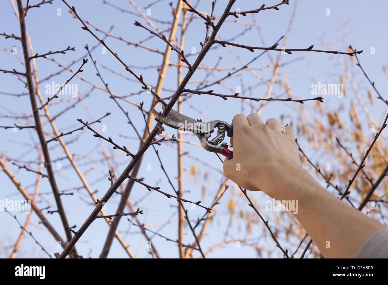 Obstbaum Schneiden ein obstbaum schneiden ästen im frühjahr beschneiden stockfoto