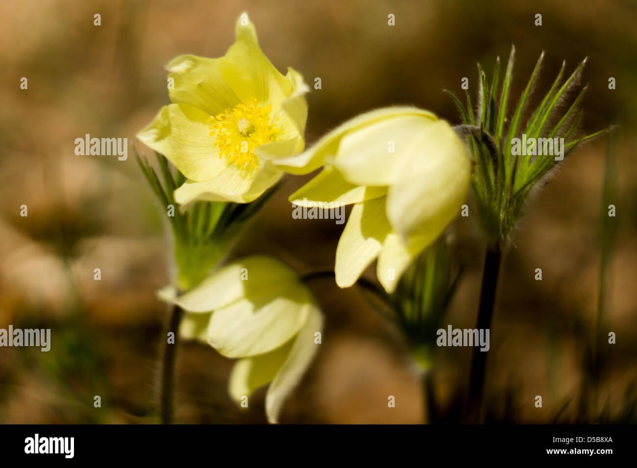 First Spring Flowers Stockfotos First Spring Flowers Bilder Alamy