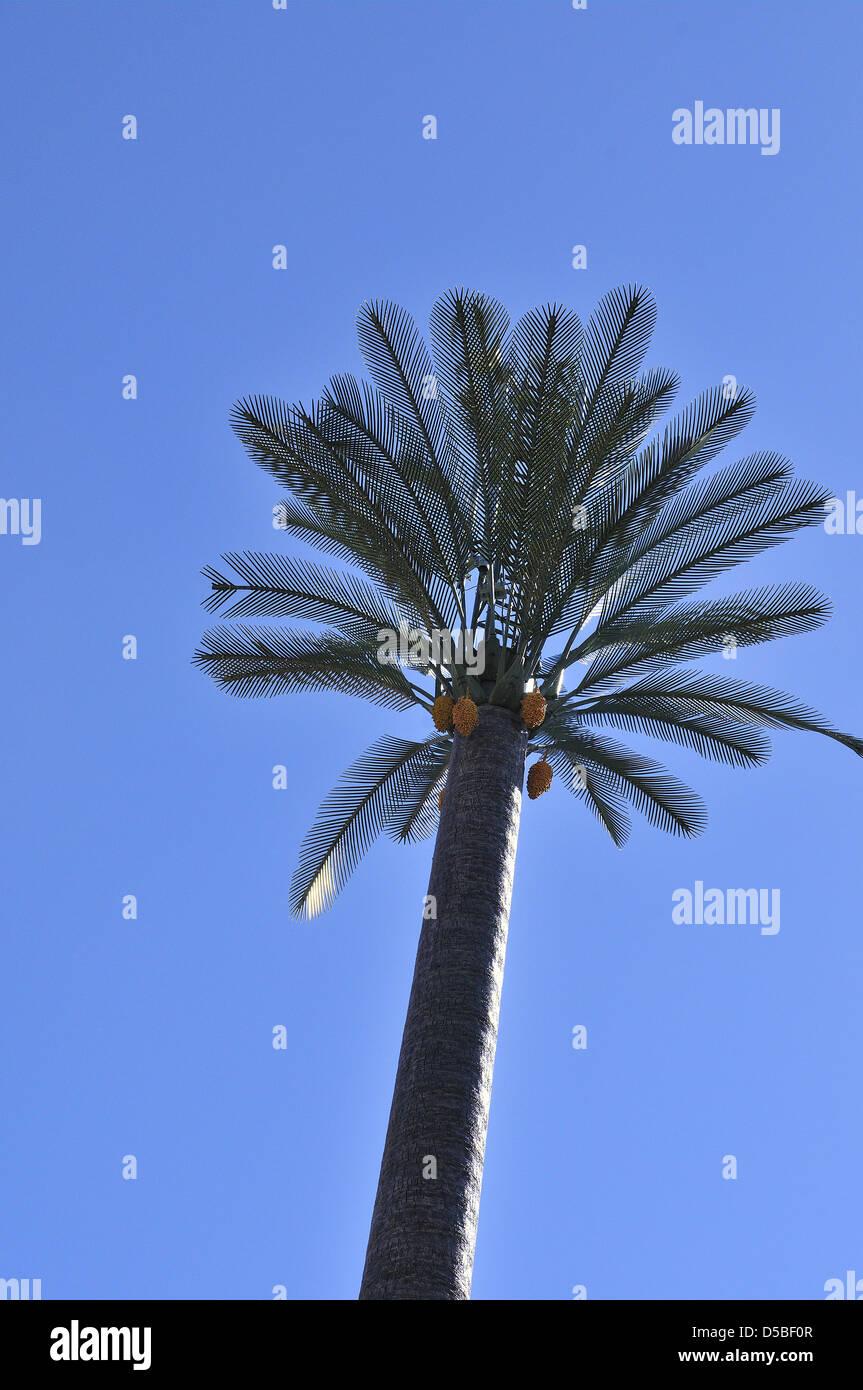 Telekommunikation-Antennen und Masten verkleidet in einem Mann-machte Palme mit Stamm, Fonds und seine Früchte. Stockbild