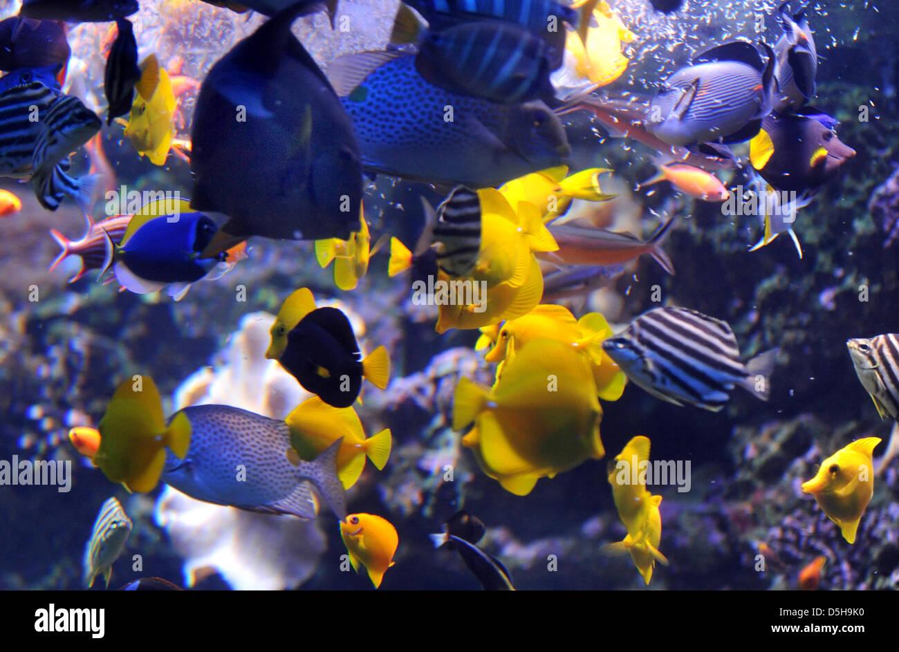 Beste Tropische Fische Färbung Seite Galerie ...