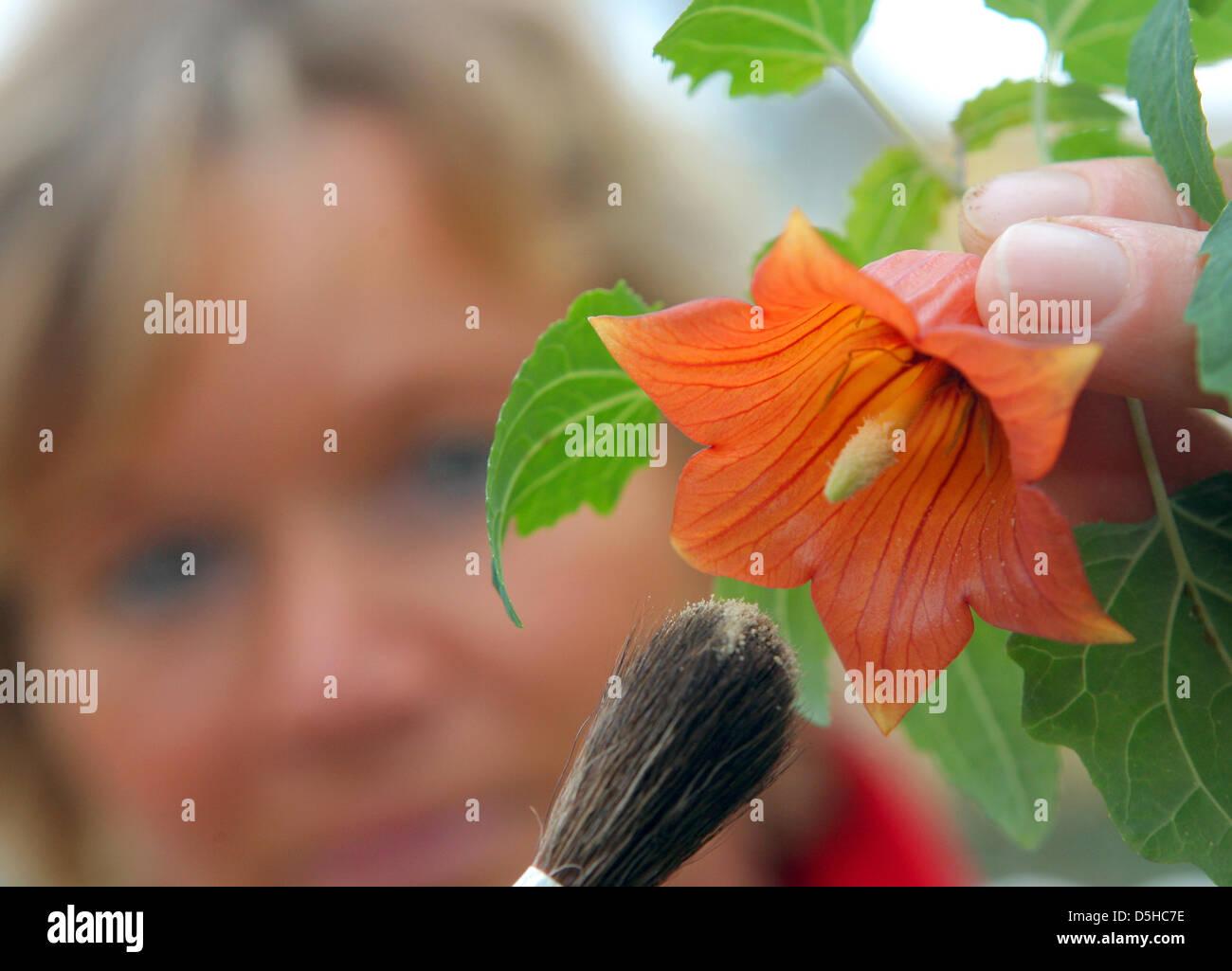 Sylvia Berndt Checkt Eine Kanarische Glockenblume Im Tropischen