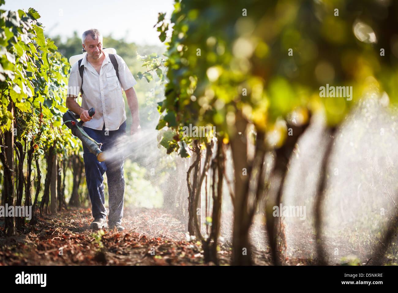 Winzer in seinem Weinberg Spritzen Chemikalien auf seine Reben Wandern Stockbild