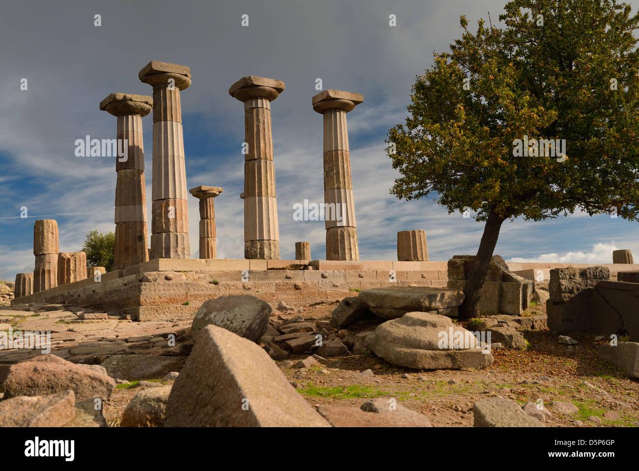 Dorischen Säule Ruinen der Tempel der Athena mit Quitten Baum in Assos behramkale Türkei Stockbild