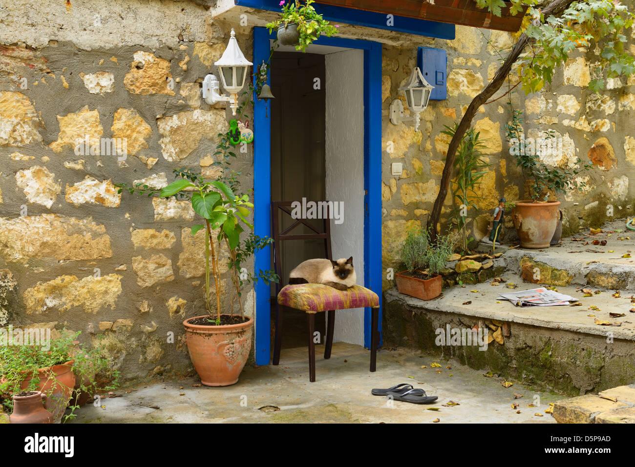 siamesische katze auf stuhl in der t r von haus aus stein im hillside dorf yesilyurt t rkei. Black Bedroom Furniture Sets. Home Design Ideas