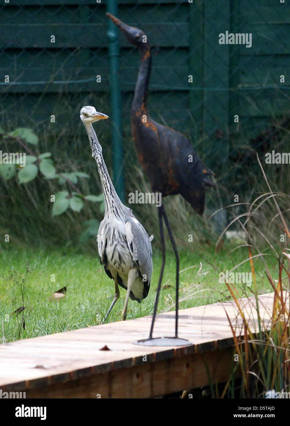 Vogelscheuche stockfotos vogelscheuche bilder alamy for Teichfische nrw