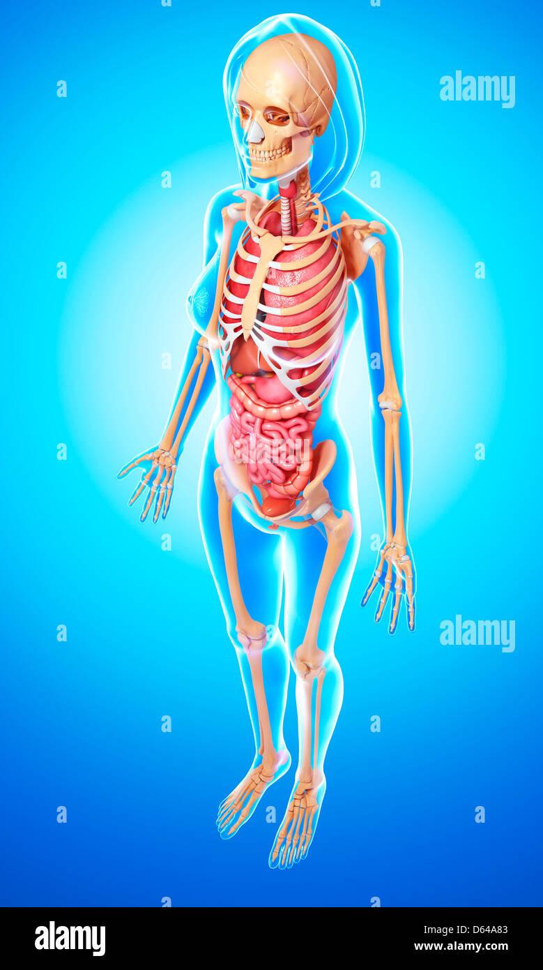 Gemütlich Voll Weibliche Anatomie Fotos - Menschliche Anatomie ...