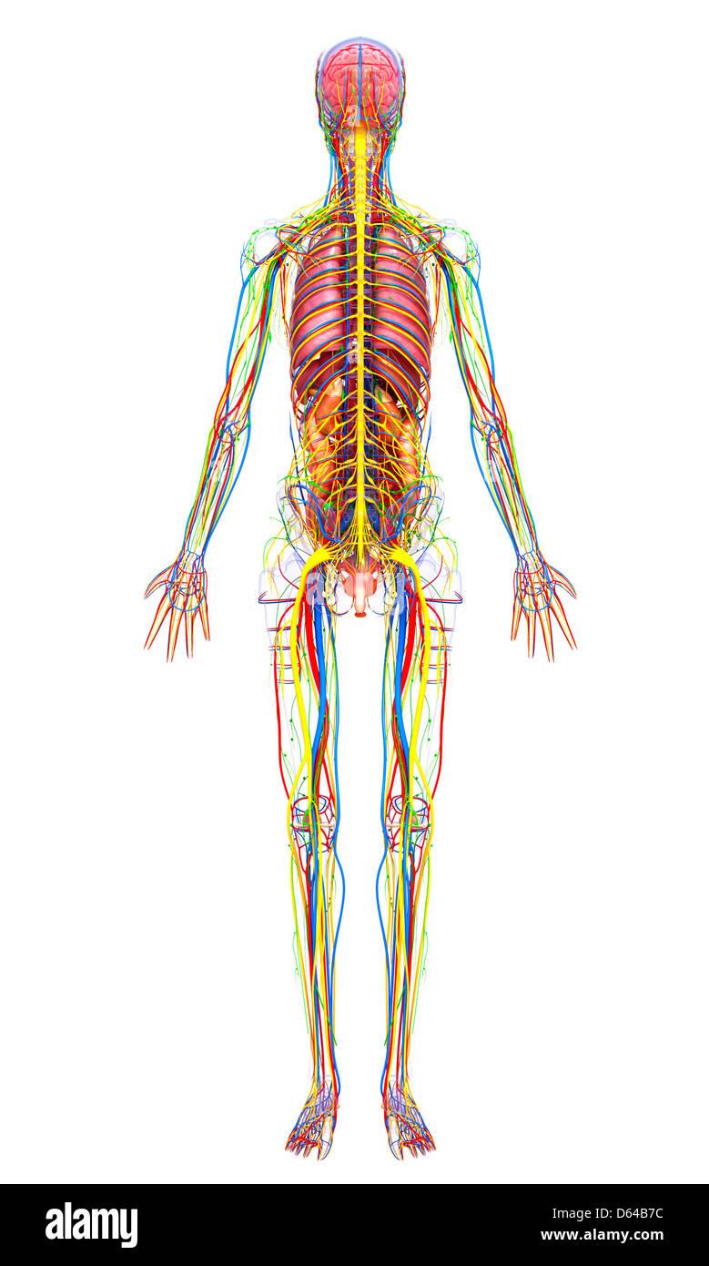 Atemberaubend Becken X Ray Anatomie Zeitgenössisch - Anatomie Ideen ...