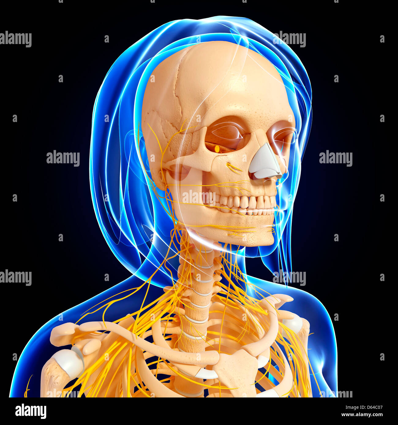 Erfreut Bild Vom Humerusknochen Bilder - Menschliche Anatomie Bilder ...