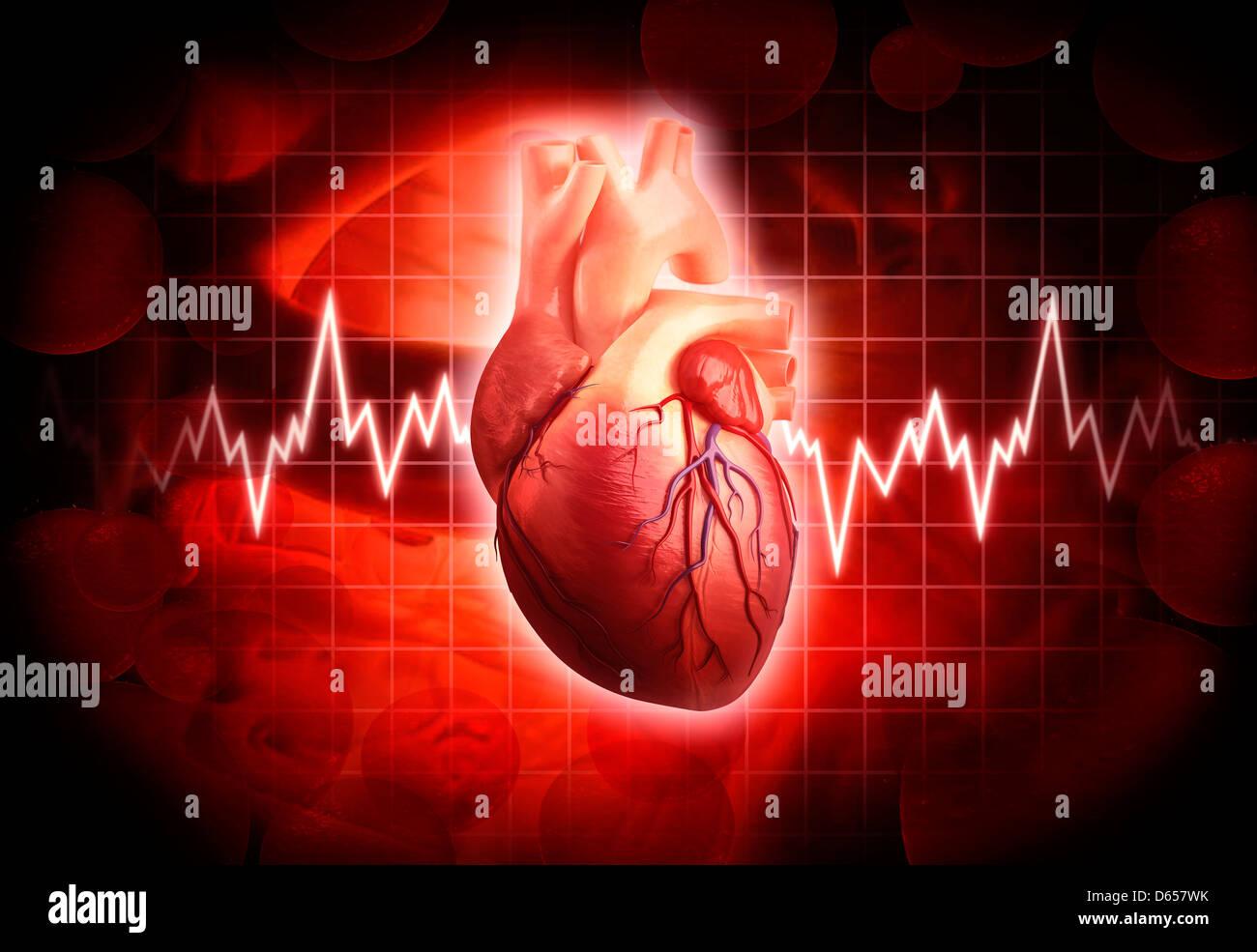 Menschliches Herz, artwork Stockbild