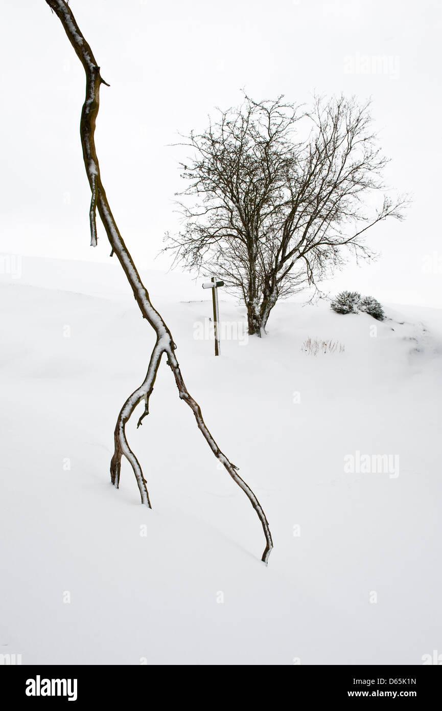 Ein Zweig gebrochen durch den Schnee während der harten späten Frühjahr 2013 Stockbild