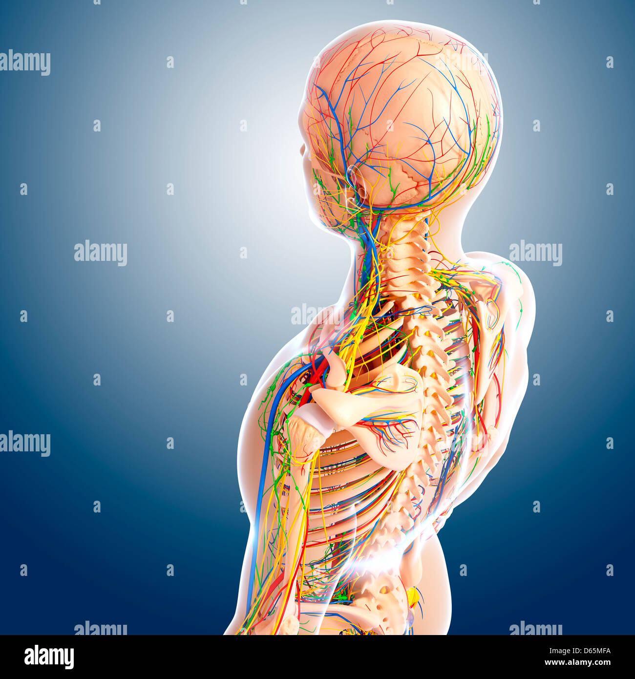 Rear View Upper Body Nervous Stockfotos & Rear View Upper Body ...