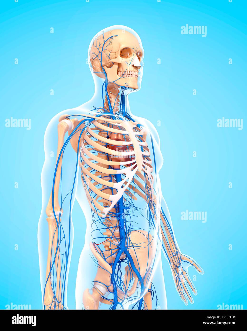 Beste Menschliche Anatomie App Für Android Fotos - Menschliche ...