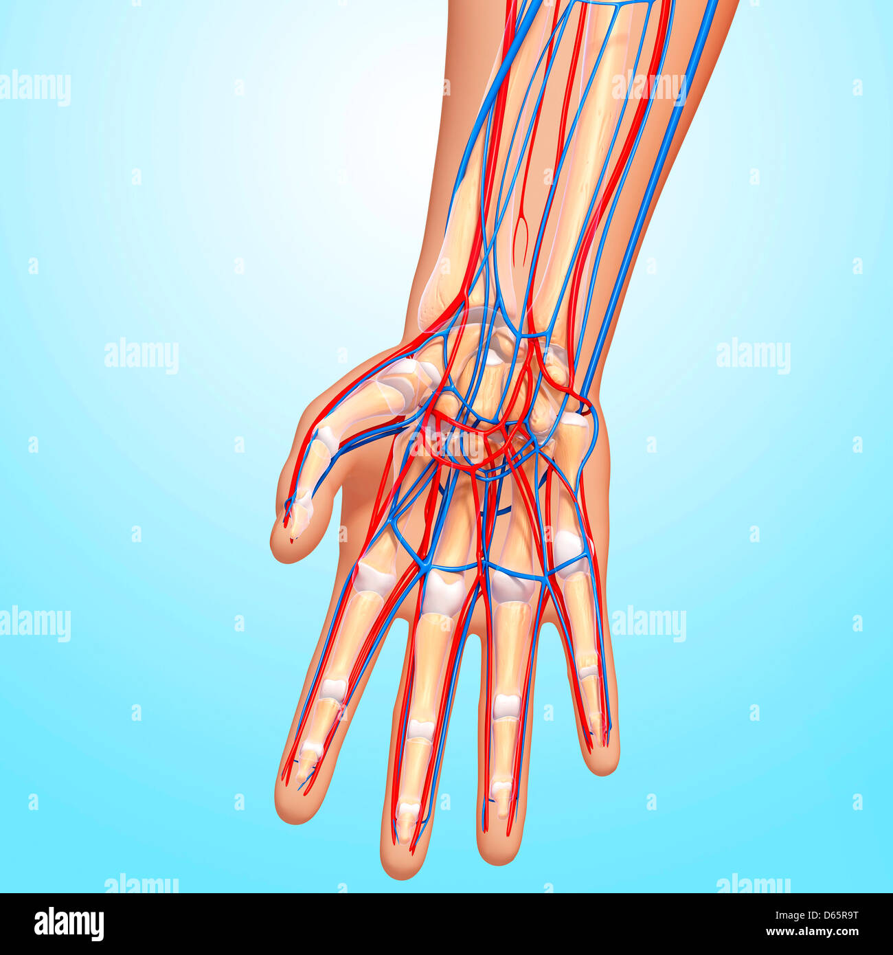 Skeleton Hand Stockfotos & Skeleton Hand Bilder - Alamy