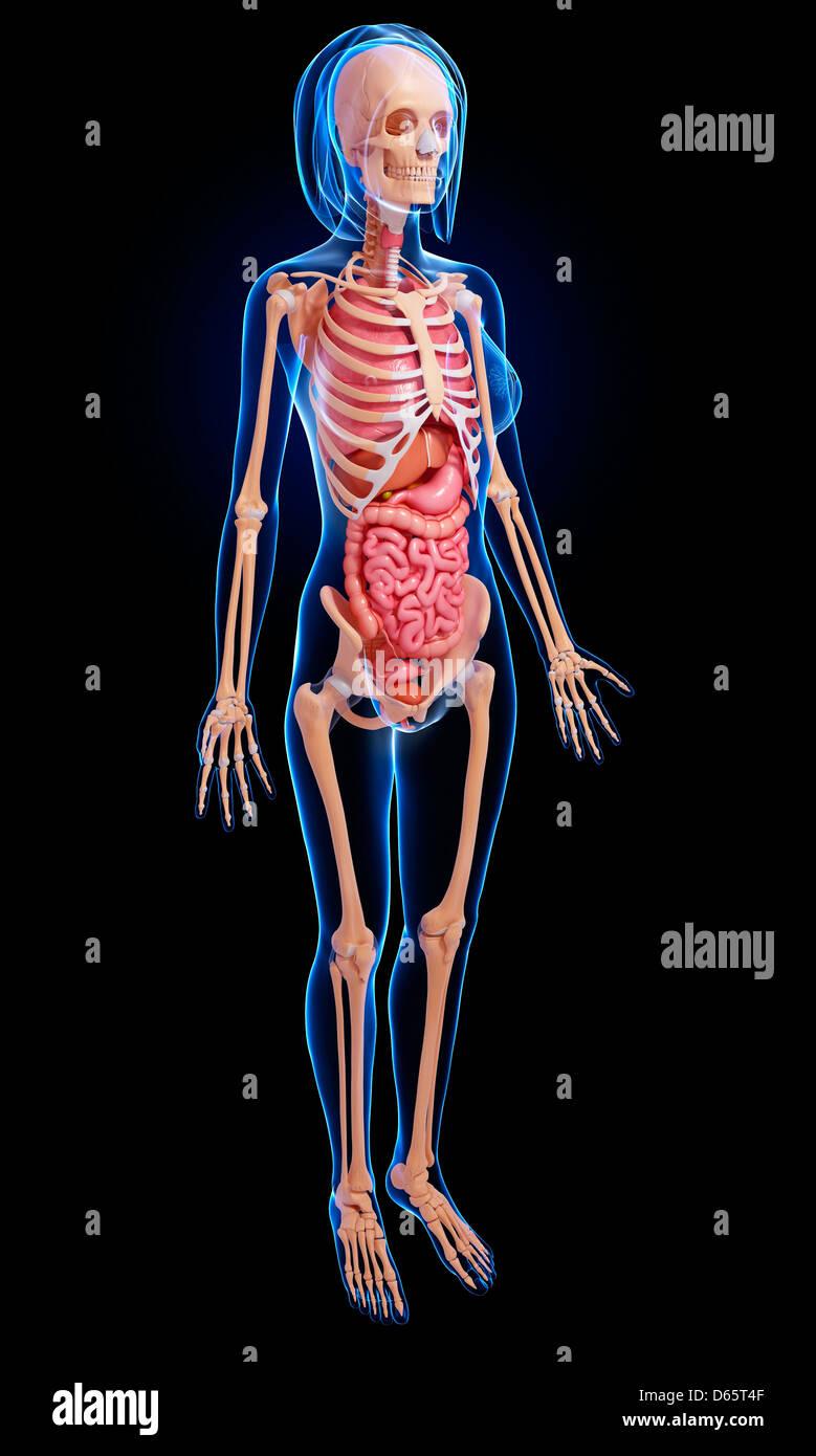 Wunderbar Weibliche Anatomie Gebärmutterhals Diagramm Fotos ...