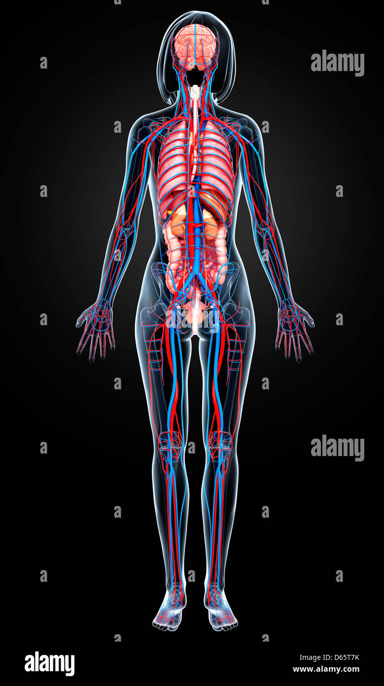 Beste Studie Anatomie Bilder - Menschliche Anatomie Bilder ...