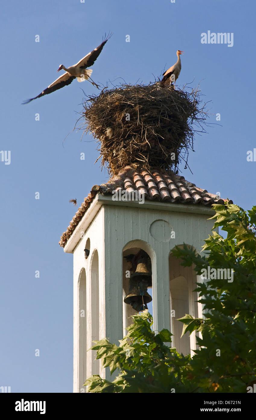 Zwei Weißstörche im Nest auf Kirchturm Stockbild