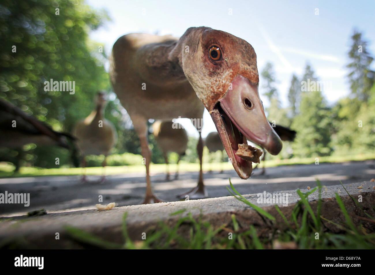 Bad Schwalbach Stockfotos Bad Schwalbach Bilder Alamy