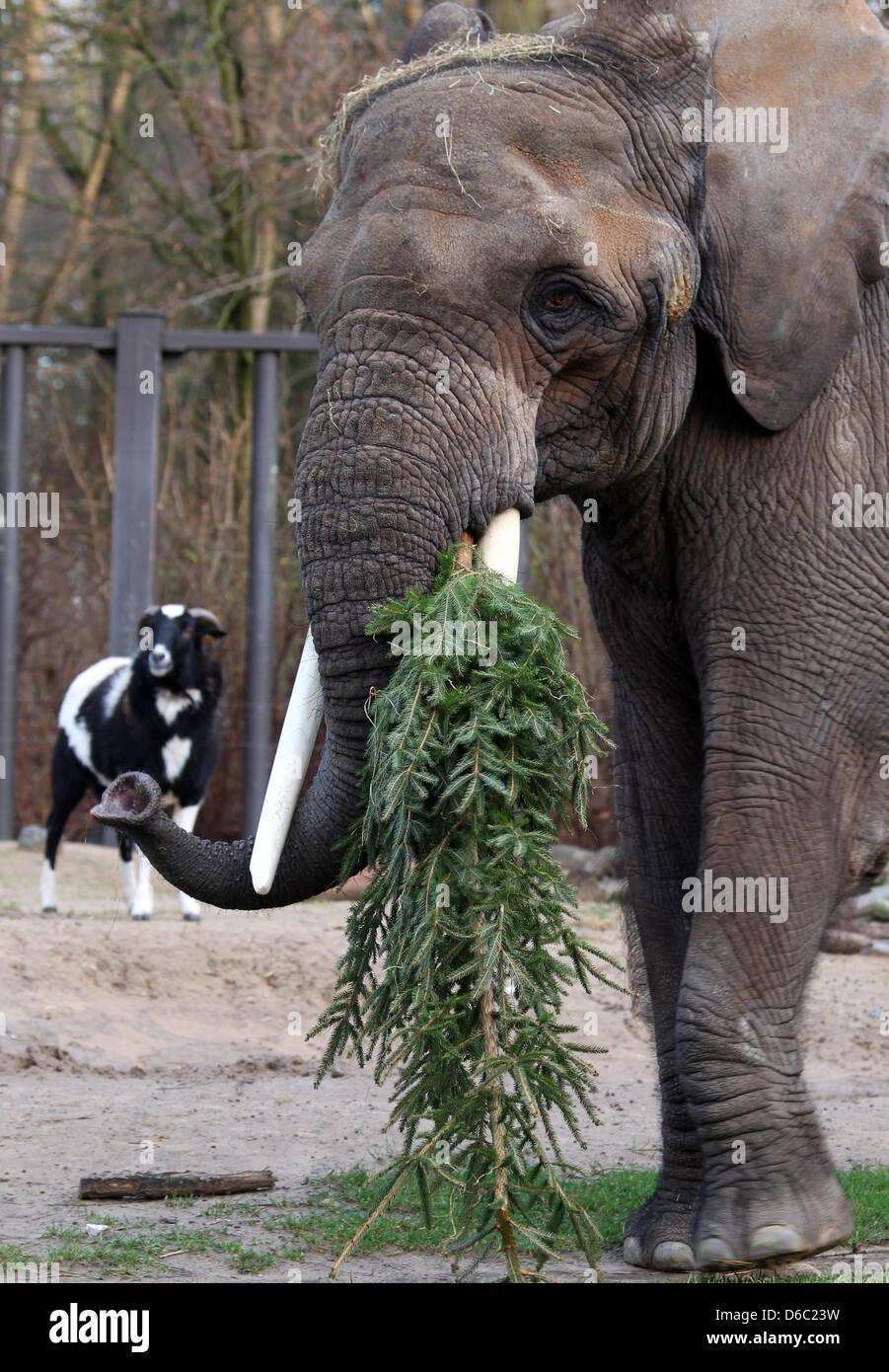 Weihnachtsbaum rostock