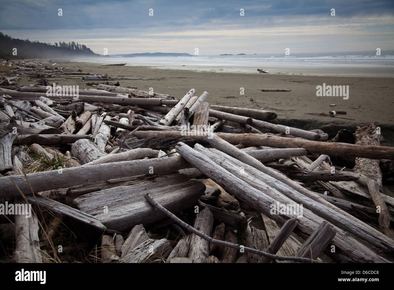 Treibholz auf Long Beach, Vancouver Island Stockfoto