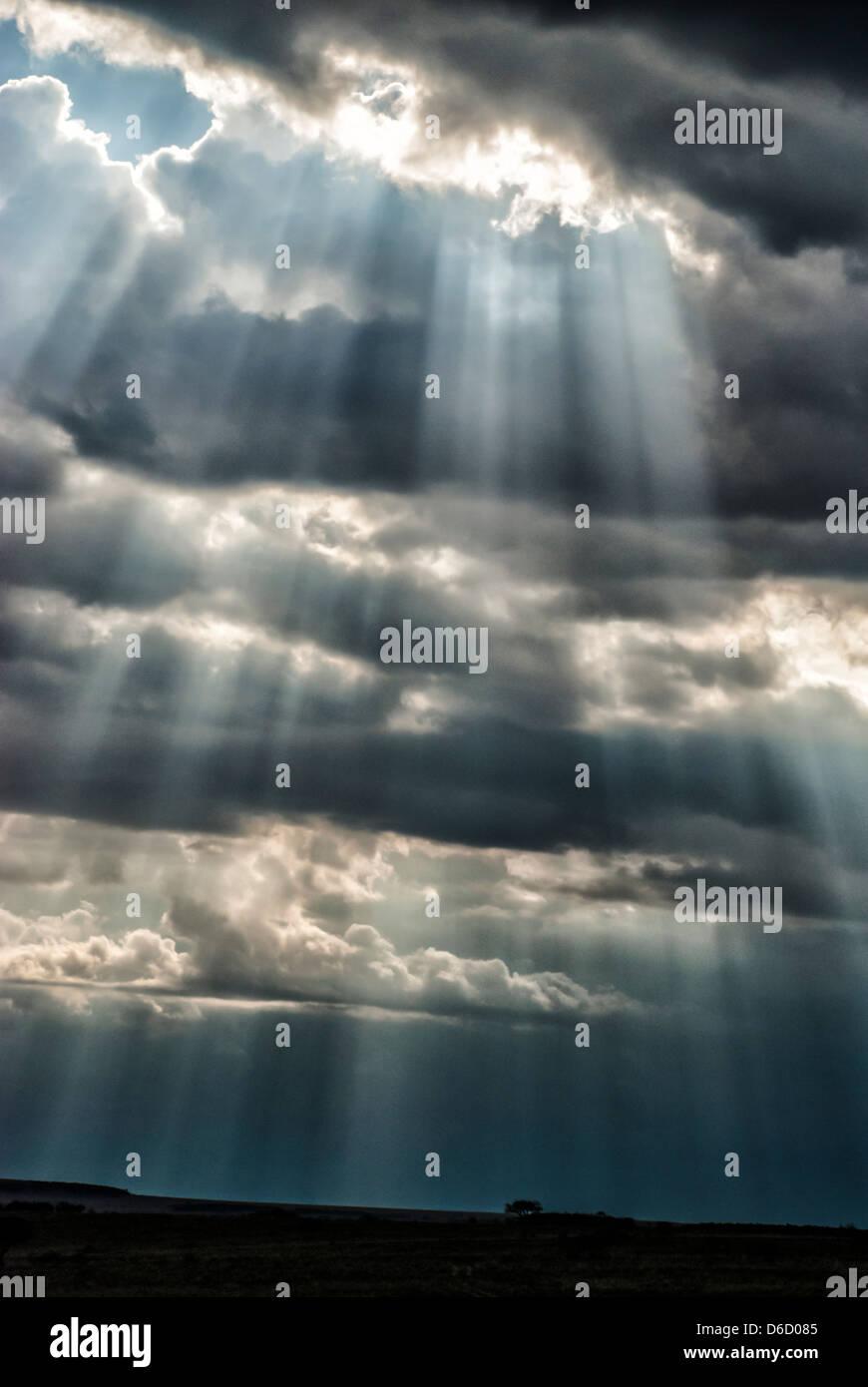 Strahlen des Sonnenlichts, das durch Gewitterwolken in die Masai Mara, Kenia, Afrika Stockbild