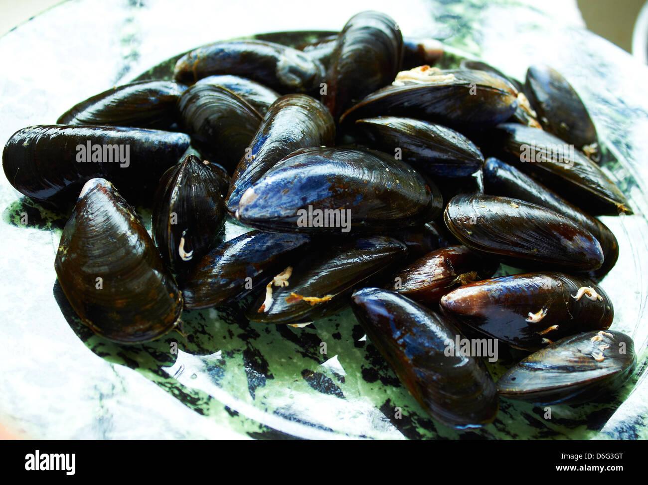 Frischen lebenden schottischen Muscheln Stockbild