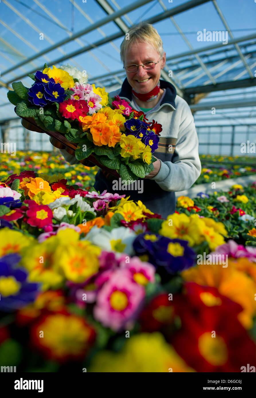 Gärtner Heike Meifert steht unter blühenden Primel Blumen in ...