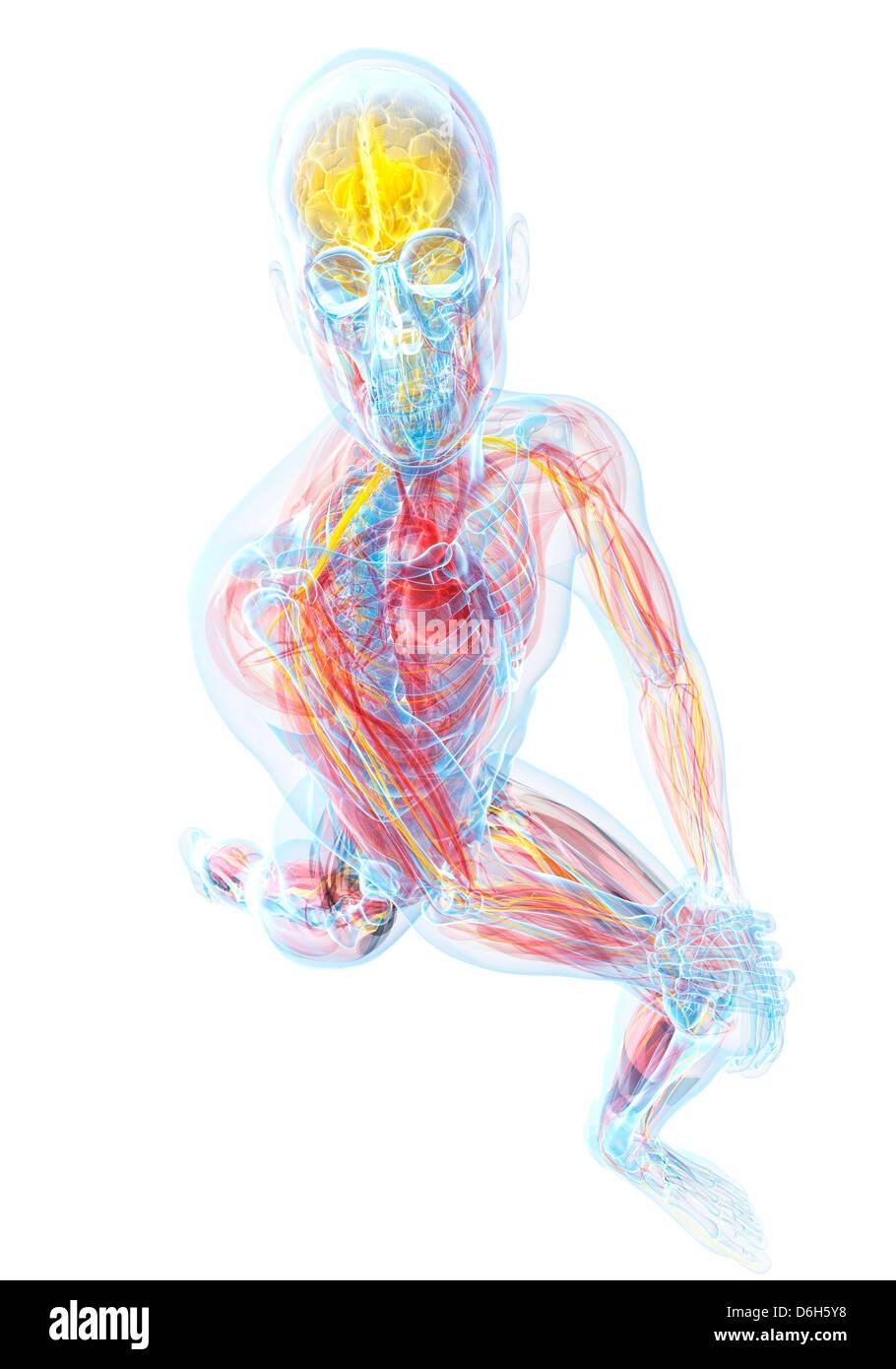 Niedlich Männliche Anatomie Zeichnung Praxis Galerie - Anatomie ...
